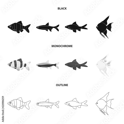angelfish common barbus neon fish set collection icons in black
