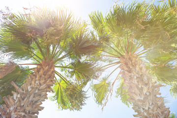 Two tropical palm tree. Summer concept, tropical background