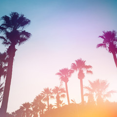 Palm trees against the sunset. Summer tropical background.