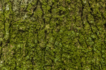 green moss in the bark tree