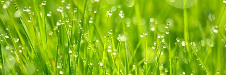 Frisches Gras mit Tautropfen und Bokeh