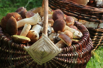 Basket full of fresh boletus mushrooms in forest. Top view