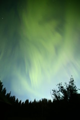 Aurora borealis over forest in northern Sweden