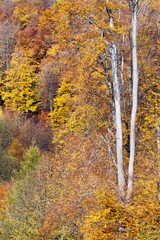 Beautiful autumn trees in the forest, vertical background