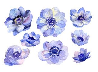 Foto auf Leinwand Blumen Watercolor flower buds set for wedding card