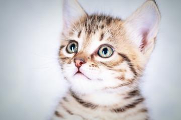 Close up portrait of a little tabby kitten