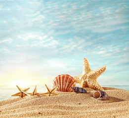 shells on beach and summer time