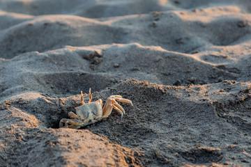 Crabs. Sand. Sea coast