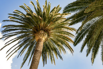 Palm tree on the Mediterranean