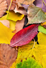 colorful leaves of differents trees