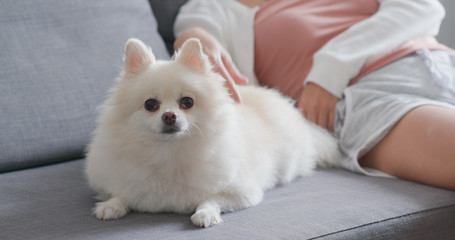 Pet owner touch on White pomeranian dog and sitting on couch