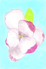Digital painting of a pink magnolia, on blue background