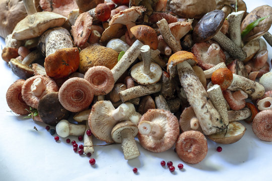 A bunch of different edible wild mushrooms.