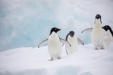 Foto op Canvas Pinguin penguin in the arctic