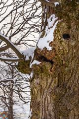 Tree trunk looks like face