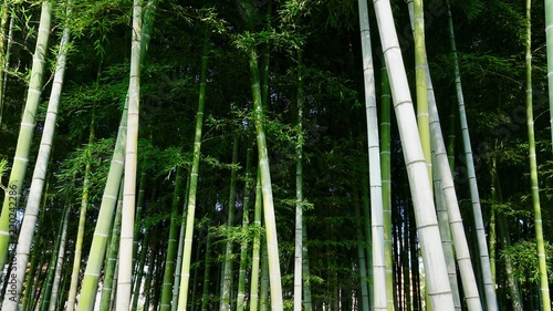 Bamboo Bambus In Der Natur Stock Photo And Royalty Free Images On