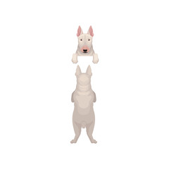 Portrait of bull terrier s muzzle with paws peeking out from border and back view of full body. Home pet. Flat vector design