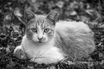 Black and white photo of a cat sitting in the grass