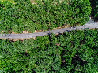 Overhead a Road in Virginia Forest