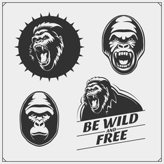 Set of emblems with gorilla for a sport team.