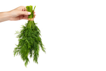Fresh green dill with hand isolated on the white background, studio macro image, copy space template.