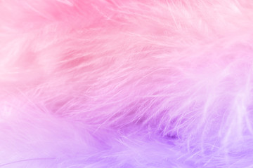 Macro shot of pastel bird fluffy feathers in soft and blur style