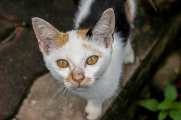 A homeless cat makes eyeballs.