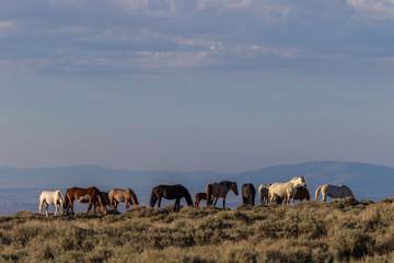 Wild Horses in Sand Wash Basin Colorado