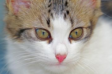 portrait of a beautiful kitten