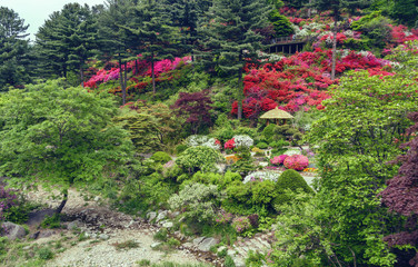 blossom of rhododendron on hill in asian garden