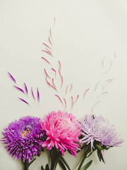 Colorful aster flowers forming a frame on a background, minimal concept, top view, copy space for your text Scattered petals