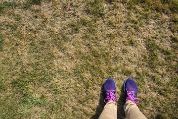 Rasen, vertrocknet, Hitzeperiode