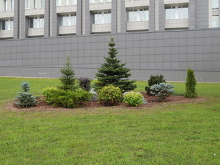Urban flower bed with stones and coniferous plants