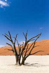 Loney Tree in the wild