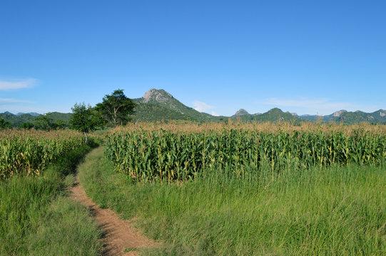 A road near corn field in Malawi in Africa