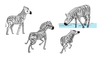 set of zebras different positions running drinking water playing