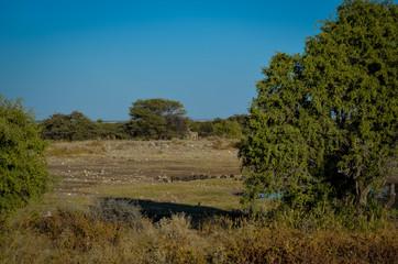 Perlhühner und Zebra