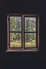 View of a forest through a cabin window during the summer in Colorado.