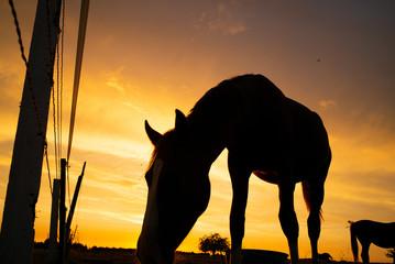 Cavalli al tramonto