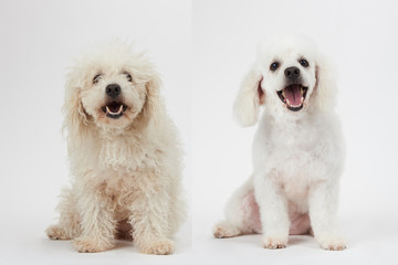 Dog grooming theme before and after