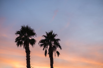 Silhouette of palm trees  against a dark, colorful sunset.