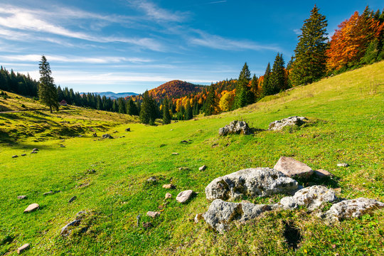 beautiful morning in mountains. mixed forest in fall colors on the hill. rocks on a grassy meadow