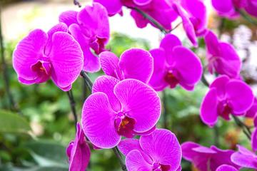Violet Orchids flowers in park