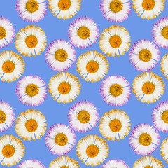 Daisy, marguerite. Seamless pattern texture of flowers. Floral background, photo collage