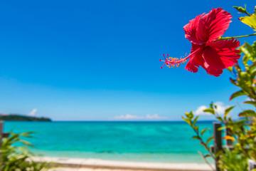 沖縄の海とハイビスカス