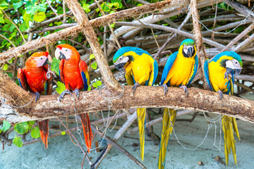 Macaw Parrots on the tree branch