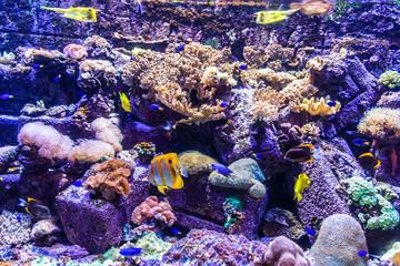 Aquarium in Hotel Atlantis in Duba