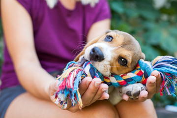 Cuddling with beagle puppy