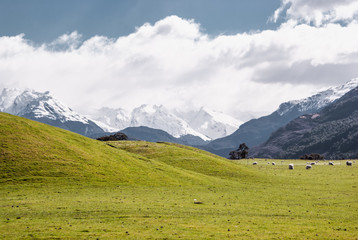 Alpine scenery at Mount Aspring national park. Hiking in New Zealand