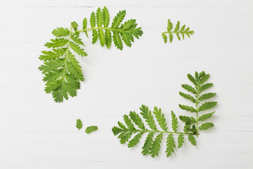 green leaves on white wooden background